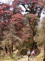 春・・・樹林帯は珊瑚の海に